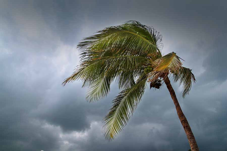 Palm tree swaying in the wind with storm clouds in the background
